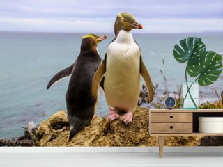 rarest yellow-eyed penguin,Megadyptes antipodes, new  zealand