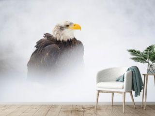 Bald eagle in winter