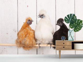Silkies chickens in henhouse