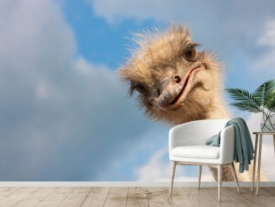 Ostrich head closeup outdoors