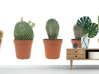 cactus collection isolated on white