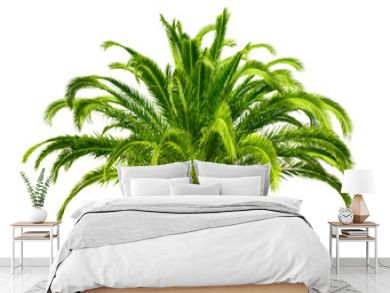 Perfect palm tree isolated on white
