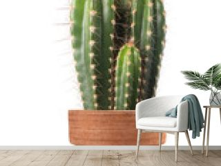 cactus in vase isolated on white
