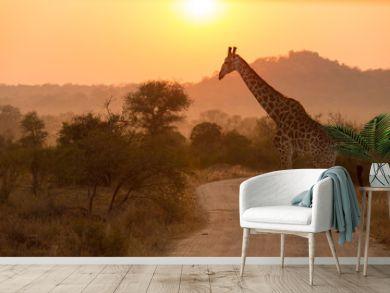Giraffe At Sunrise Kruger National Park