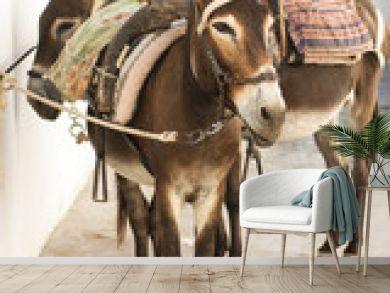 Donkeys in Lindos, Greece
