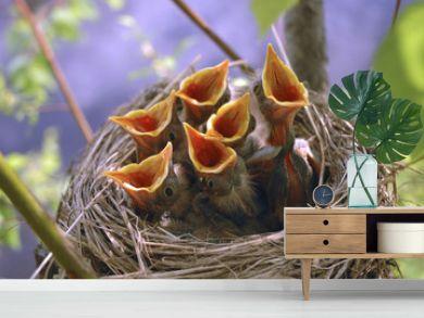 nest baby birds