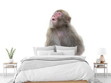 обезьяна на белом фоне