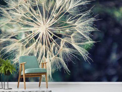Macro image of big beautiful dandelion