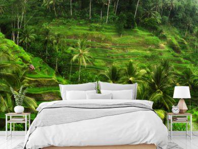 Rice fields near Ubud in Bali