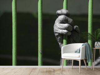 chimp in l prison