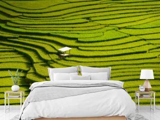 Beautiful landscape Green Terraced Rice Field in Mu cang chai, V