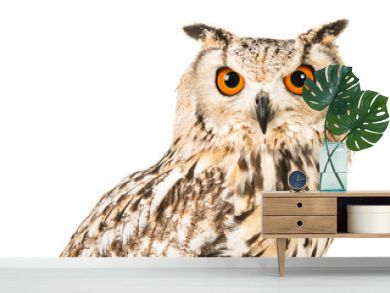 Eagle owl facing the camera isolated on a white background