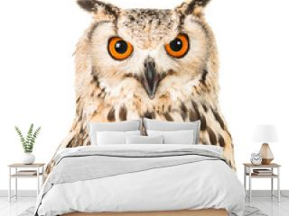 Eagle owl portrait facing the camera isolated on a white background
