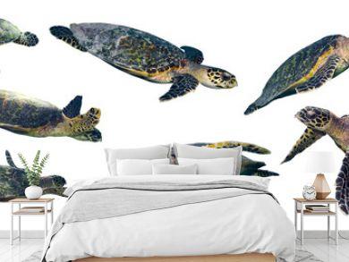 isolated sea turtle set on white background