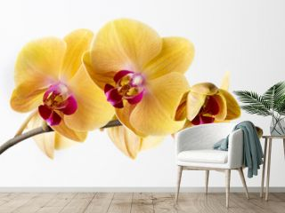 Beautiful yellow orchid on the white background.