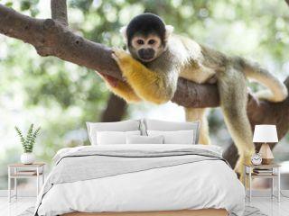 Lazy Monkey on Tree