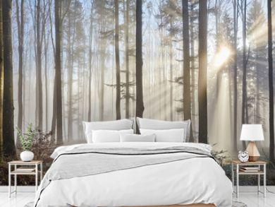 Sun rays through the foggy forest