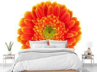 Orange gerbera flower isolated on white.