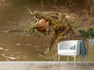 Krokodil mit Beute