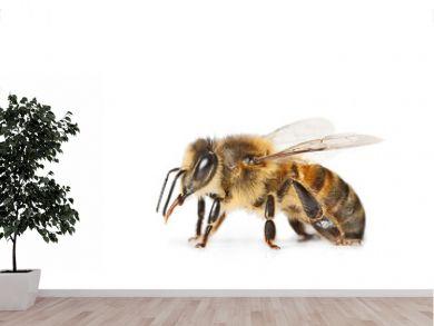 abeille isolé sur fond blanc