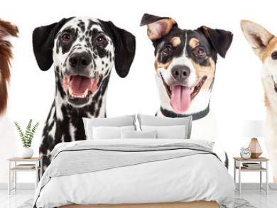Four Happy Dog Closeups
