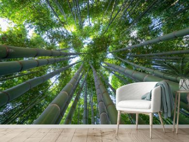 Bamboo forest, a look to the sky