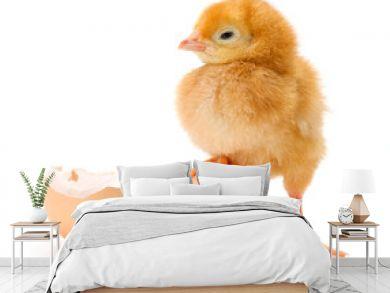 Newborn brown chicken standing on egg shells