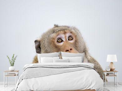 Monkey emotion surprise full face .