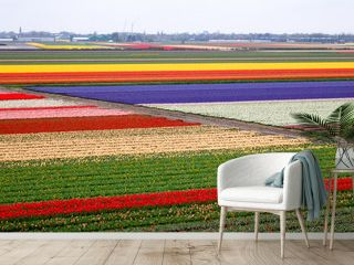 Tulip field pattern