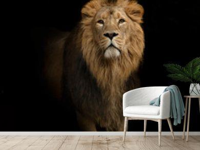 lion portrait on black