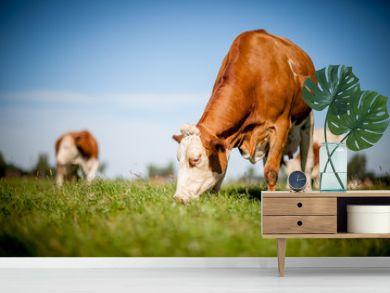 cow on grassy field