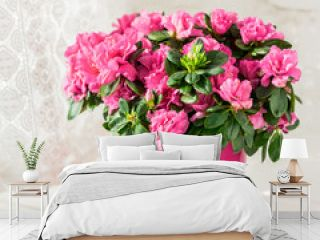 blooming azalea in pink flowerpot white rustic background