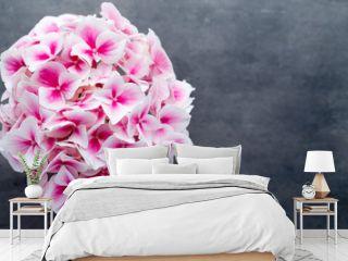 Pink flower hydrangea on blue background.