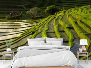 Green Terraced Rice Field in Bali, Indonesia