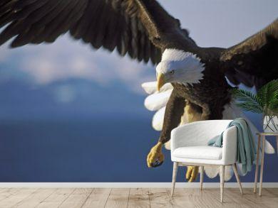 Beautiful Bald Eagle in spectacular flight, close up