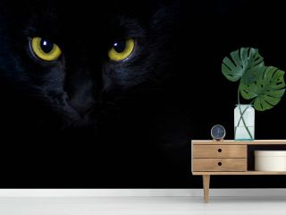 Golden stare of a black cat