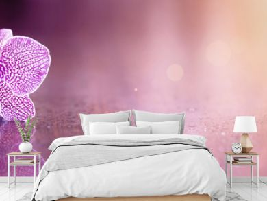 Beautiful pink orchid flower banner with copy space