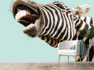 Zebra happy lougthing