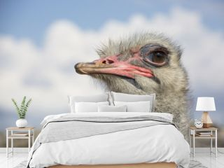 ostrich at the RAK Zoo - ostrich face