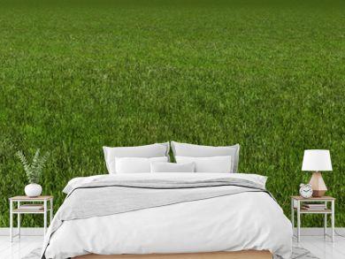 grass 3d rendering