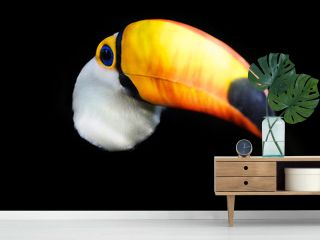 Exotic toucan bird emerging from dark background.