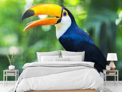 Exotic Toucan Bird in Natural Setting, Foz do Iguacu, Brazil