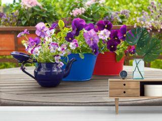 pansies flowers viola pots background