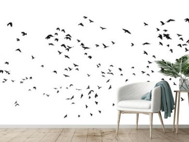 flock of birds isolated on white background, with clipping path, Rook (Corvus frugilegus)
