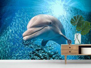 dolphin underwater on blue ocean background