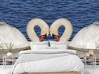 Two swans on water.