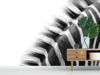 zebra neck detail