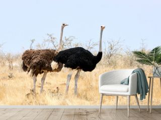 pair of ostriches with little chicks