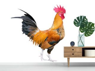 Chicken bantam ,Rooster isolated on white background (Die cutting)