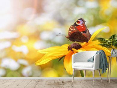 Summer, Flowers, Butterflies (Aglais io)